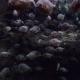 Aquarium with Many Piranhas - VideoHive Item for Sale