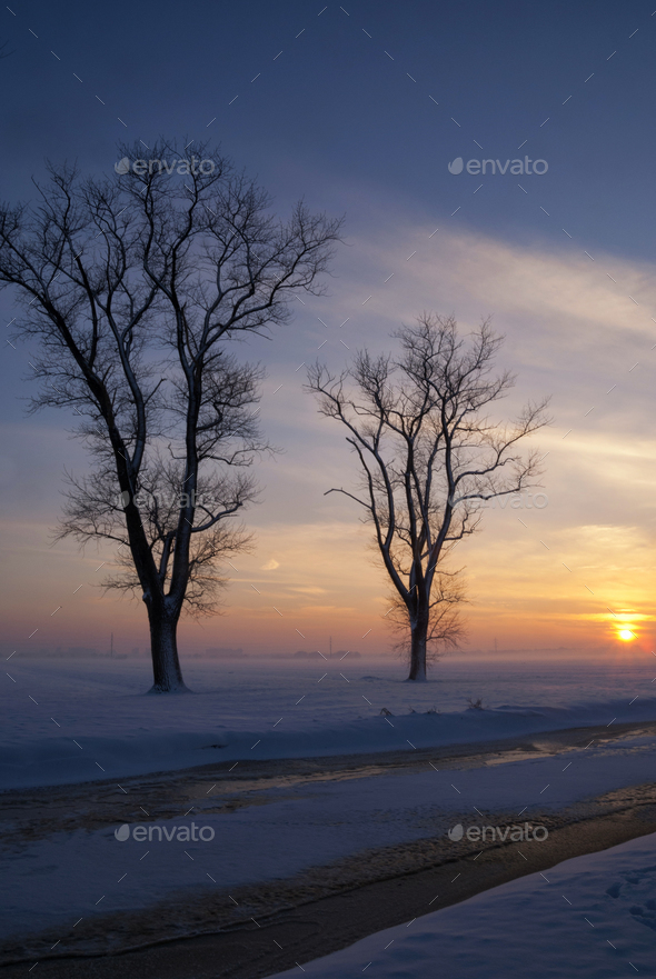 Snowy landscape in the Alblasserwaard - Stock Photo - Images