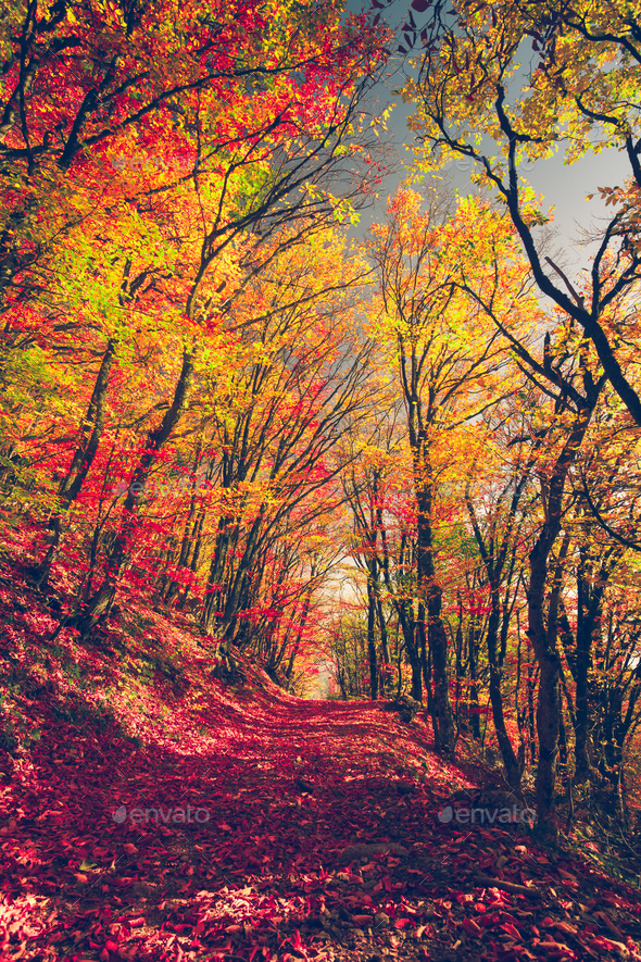 Majestic colorful forest - Stock Photo - Images