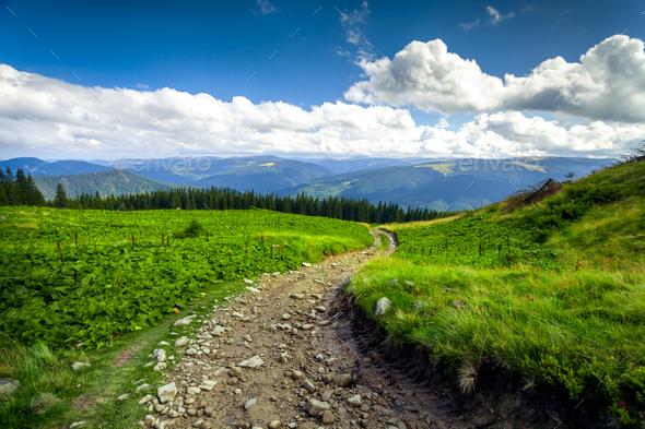 summer landscape. - Stock Photo - Images