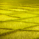 Wheat field with crossing rows. Background. - PhotoDune Item for Sale