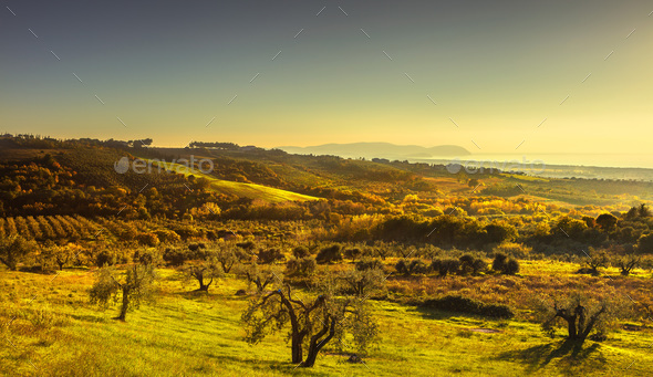 Maremma sunset panorama. Countryside, sea and Elba on horizon. S - Stock Photo - Images