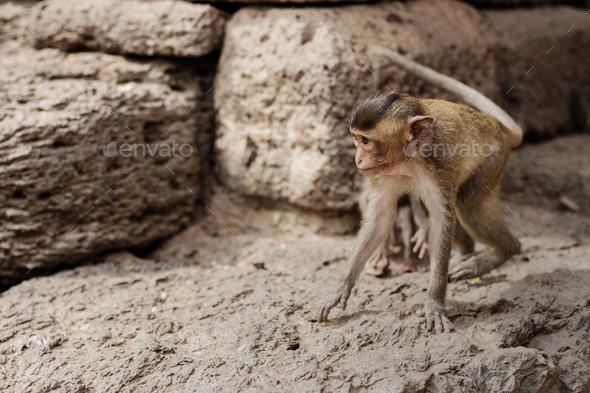 Baby monkey on building - Stock Photo - Images