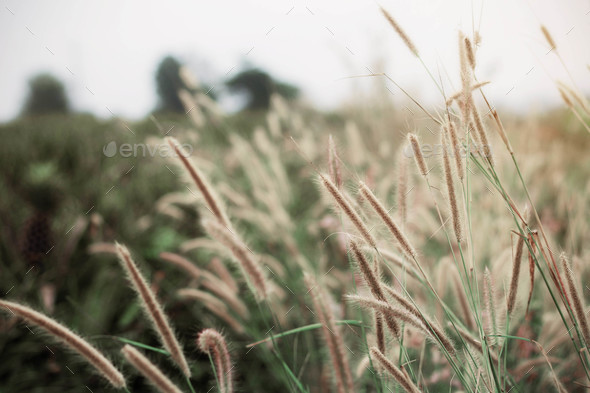 Grass on field - Stock Photo - Images