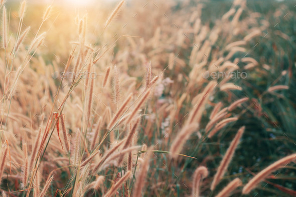 Grass with sun shining - Stock Photo - Images