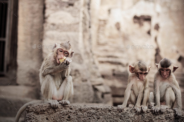 Monkey eating food on brick - Stock Photo - Images