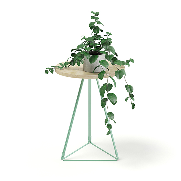 Round Table with a Plant 3D Model - 3DOcean Item for Sale