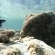 Underwater Fish Life Asia Thailand Animal, Aquatic, Blue, Fish, Ocean, Reef, Sea, Tropical, Water - VideoHive Item for Sale