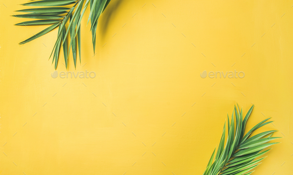 Green palm branches over yellow background, wide composition - Stock Photo - Images