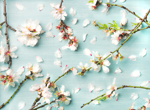 Spring floral background with white almond flowers and petals - Stock Photo - Images