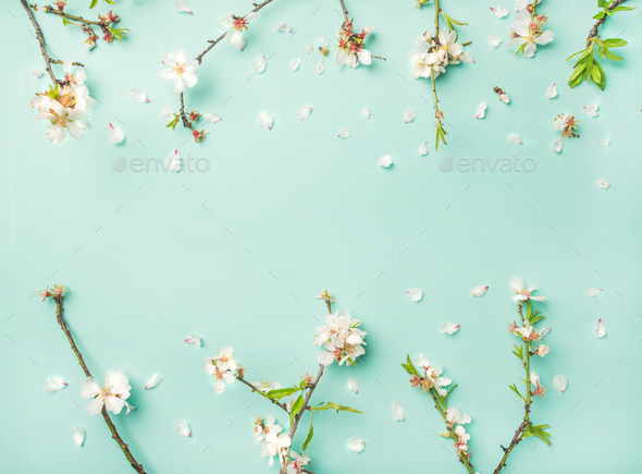 Spring almond blossom flowers over light blue background - Stock Photo - Images