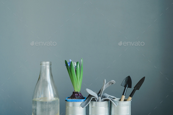 hyacinth mix plant, gloves and gardening tools in metal pot and glass bottle - Stock Photo - Images