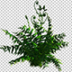 Plant - VideoHive Item for Sale