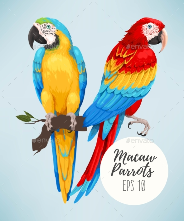 Tropical Parrots Collection - Animals Characters