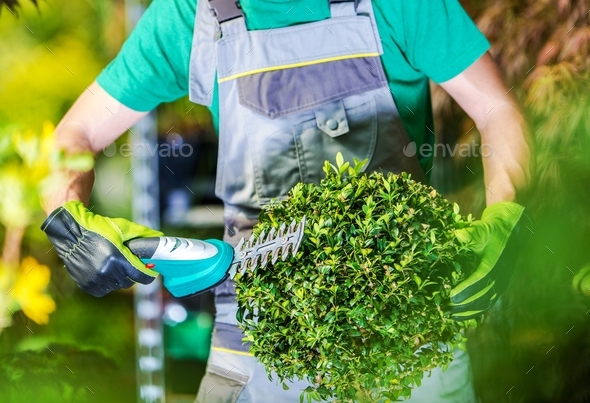 Spring Time Plants Trimming - Stock Photo - Images