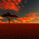 African Savanna - VideoHive Item for Sale