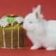 Easter Bunny Eats Cake on Red Background - VideoHive Item for Sale
