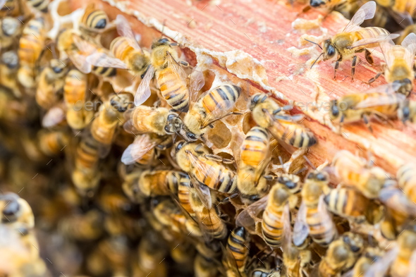 closeup of the worker bees on beehive - Stock Photo - Images