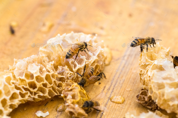 closeup of the worker bees on honeycomb - Stock Photo - Images