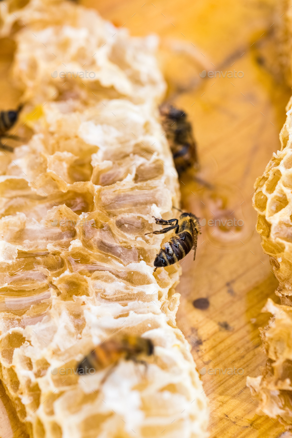 bees on honeycomb - Stock Photo - Images