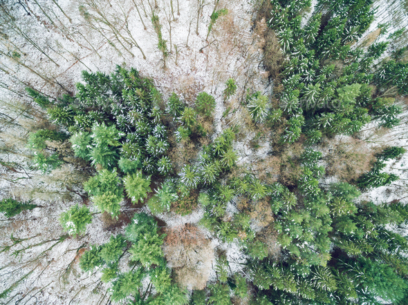 Forest In Winter From Above - Stock Photo - Images
