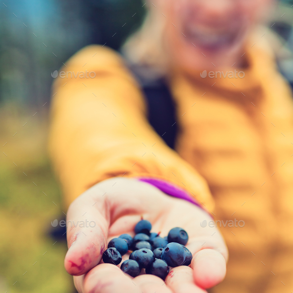Woman hand giving blueberries autumn forest - Stock Photo - Images