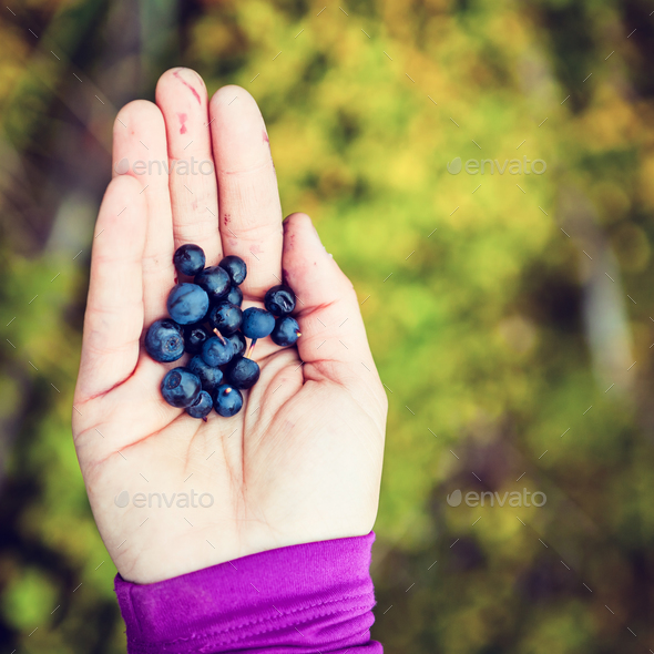 Woman hand giving blueberry vintage background - Stock Photo - Images
