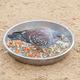 speckled rock pigeon - PhotoDune Item for Sale