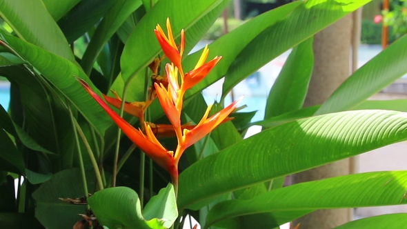 Bird Of Paradise Flower Heliconia Exotic Tropical Flowers And Close