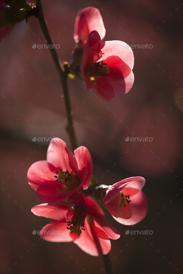 Spring flowers in full bloom - Stock Photo - Images