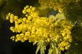 Spring flowers in full bloom - PhotoDune Item for Sale