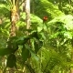 Rain and Sunshine in Tropical Jungle. Shallow Focus on Rain Forest Leafs and Flowers - VideoHive Item for Sale