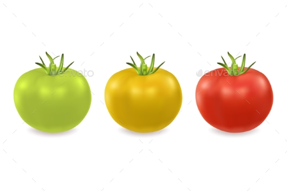 Vector Green Yellow and Red Tomato - Food Objects
