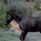 Wild Horse Stallion Chasing Stallion: Sequence - VideoHive Item for Sale