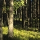 Drop Shadow Creeps on Trees in the Forest in Summer - VideoHive Item for Sale