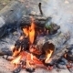 Bonfire in the Forest in Summer - VideoHive Item for Sale