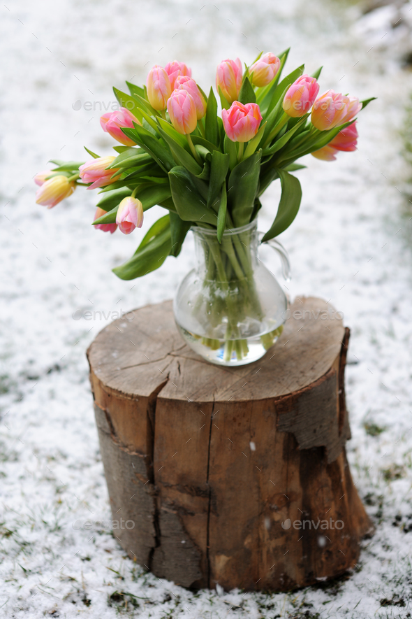 snow and tulips - Stock Photo - Images