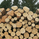 Big Pile of Logs in Winter Forest - VideoHive Item for Sale