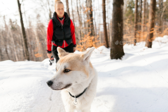 Woman and dog walking in winter mountains - Stock Photo - Images