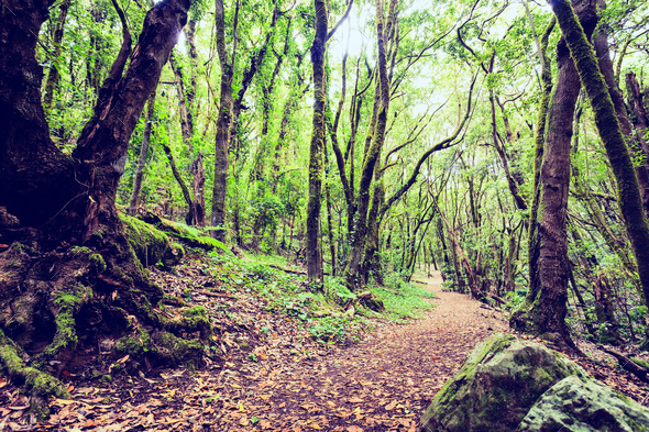 Inspirational beautiful green forest landscape - Stock Photo - Images
