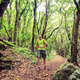 Hiker walking trekking in green forest - PhotoDune Item for Sale