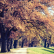 Autumn vintage park alley with trees - PhotoDune Item for Sale