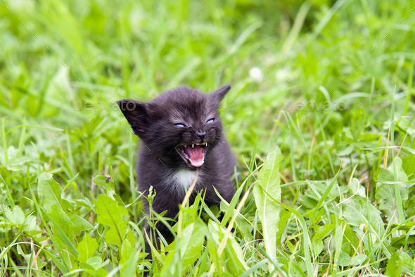 Temper - small kitten in the grass - Stock Photo - Images