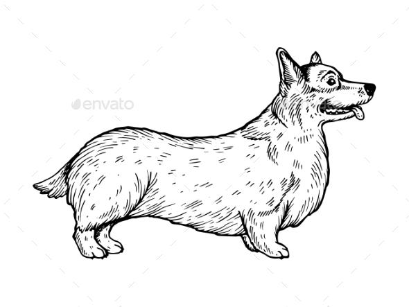 Welsh Corgi Dog Engraving Vector Illustration - Animals Characters