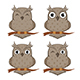 Set of Owls - GraphicRiver Item for Sale