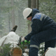 Worker Sawing With Chainsaw in Winter Forest - VideoHive Item for Sale
