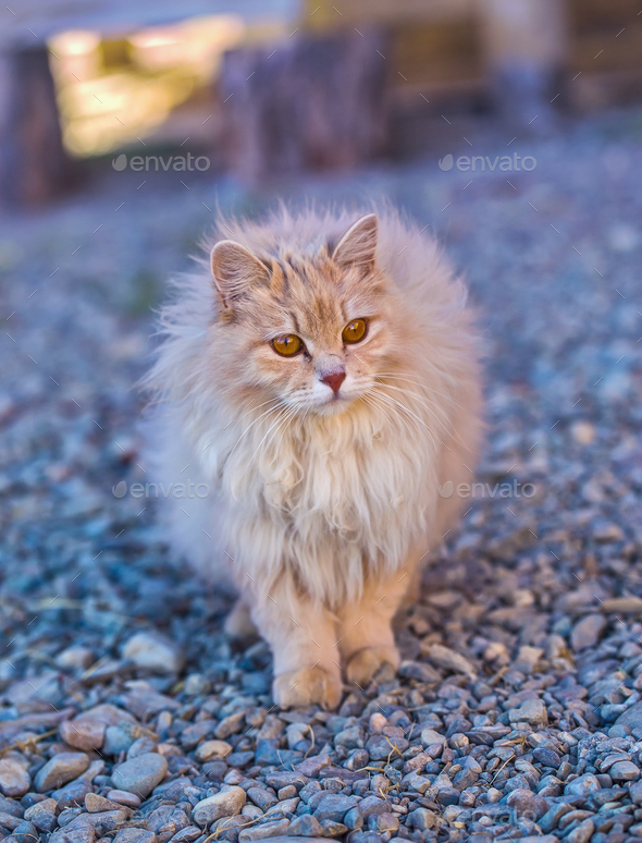 the fluffy cat stay on a wood - Stock Photo - Images