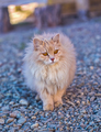 the fluffy cat stay on a wood - PhotoDune Item for Sale