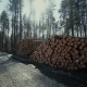 Pine Logs Forest Boards Lumberjack Feller Loggers Work Forest Road - VideoHive Item for Sale
