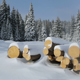 Pile of Logs in Winter Forest - VideoHive Item for Sale